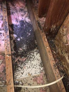 Bats R Us Wildlife LLC had to remove this feces.