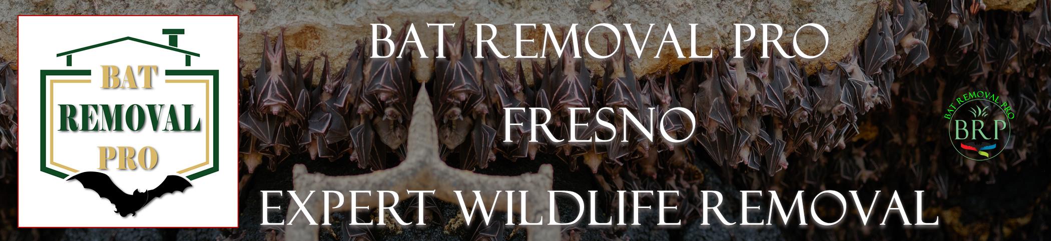 fresno california bat removal at bat removal pro