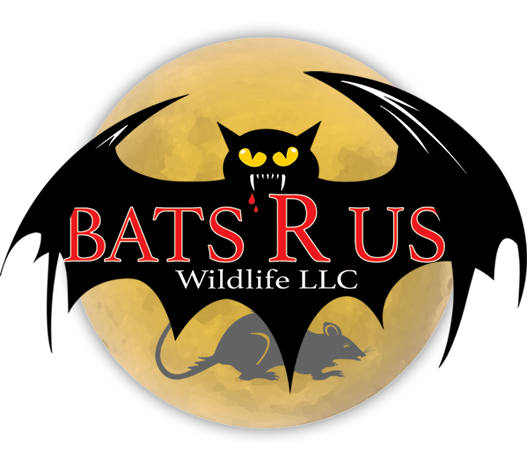 Bats R Us Wildlife LLC Greenwich Connecticut logo