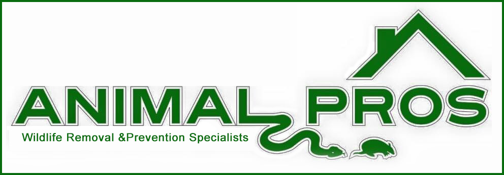 Animal Pros Bat Removal Memphis TN logo