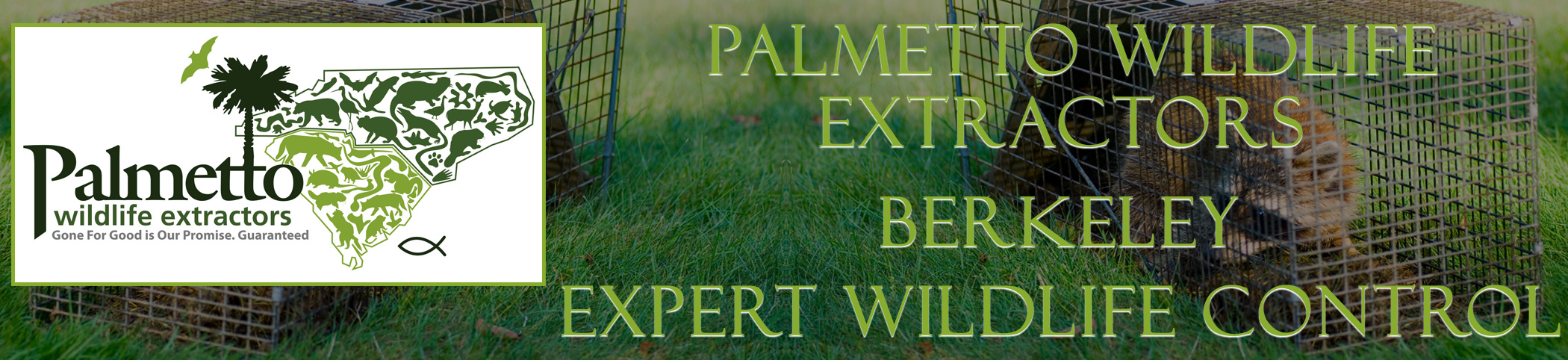 Palmetto Wildlife Extractors Berkeley south carolina header image