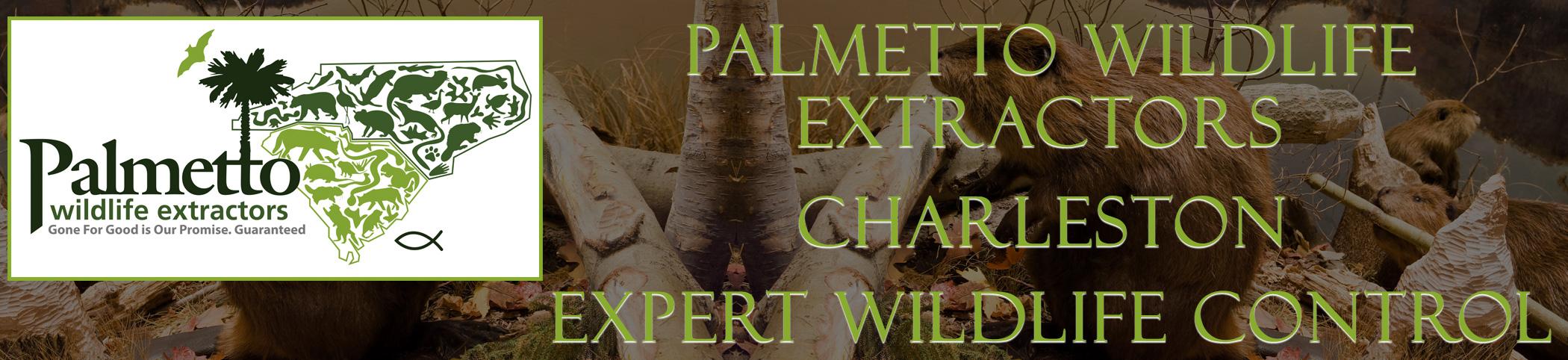 Palmetto Wildlife Extractors Charleston south carolina header image