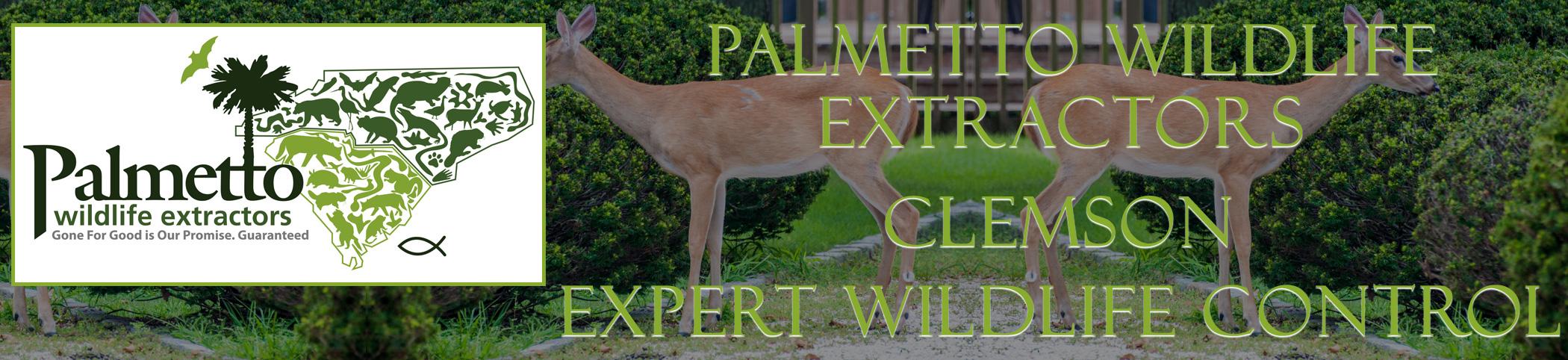 Palmetto Wildlife Extractors Clemson South Carolina header image