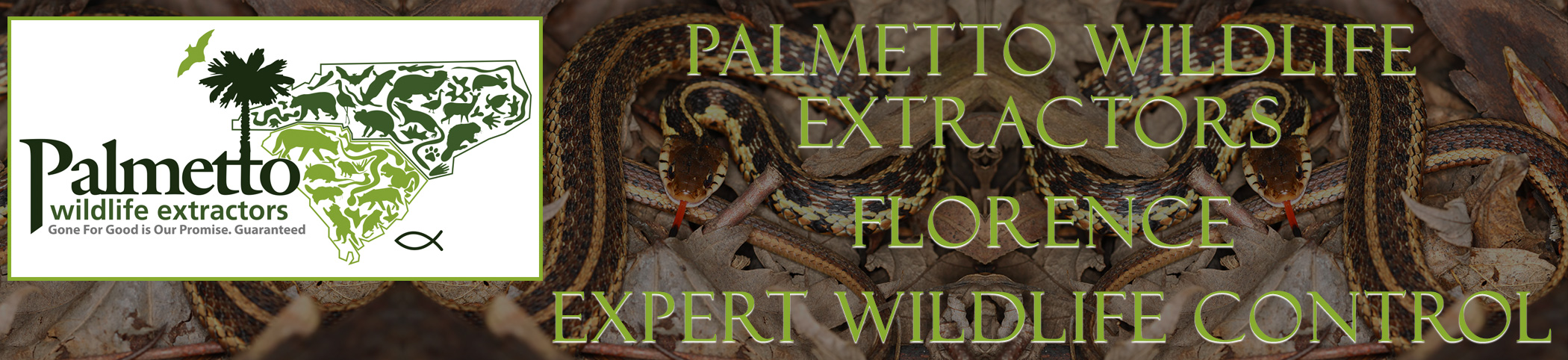 Palmetto Wildlife Extractors Florence south carolina header image