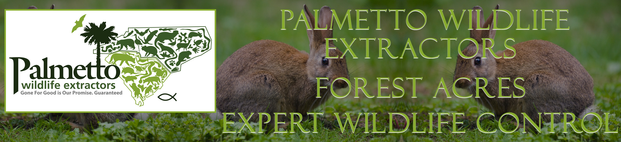 Palmetto Wildlife Extractors Forest Acres south carolina header image