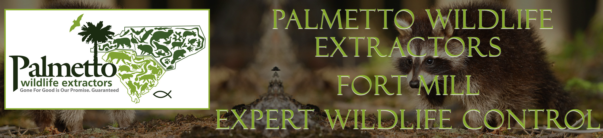 Palmetto Wildlife Extractors Fort Mill south carolina header image