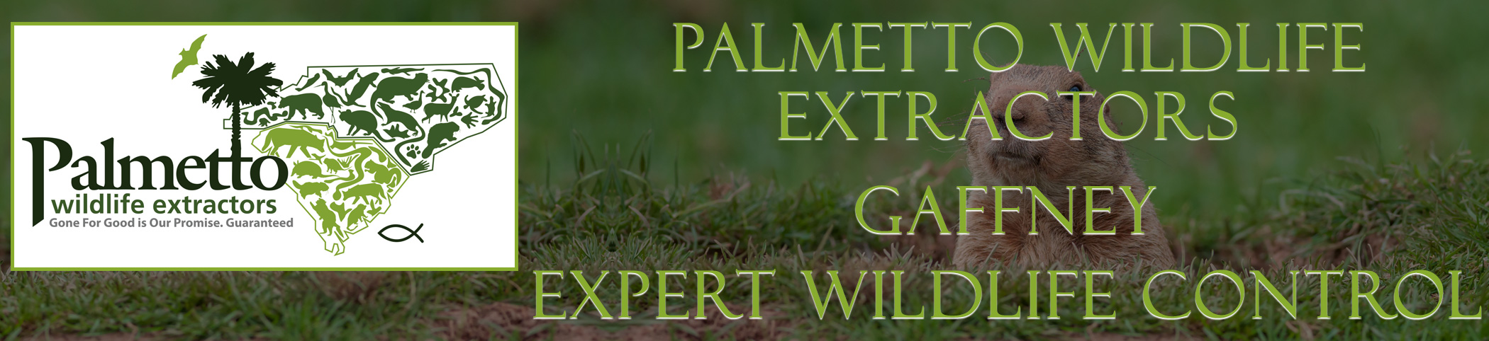Palmetto Wildlife Extractors Gaffney south carolina header image
