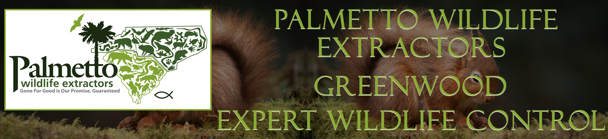 Palmetto Wildlife Extractors Greenwood South Carolina header image