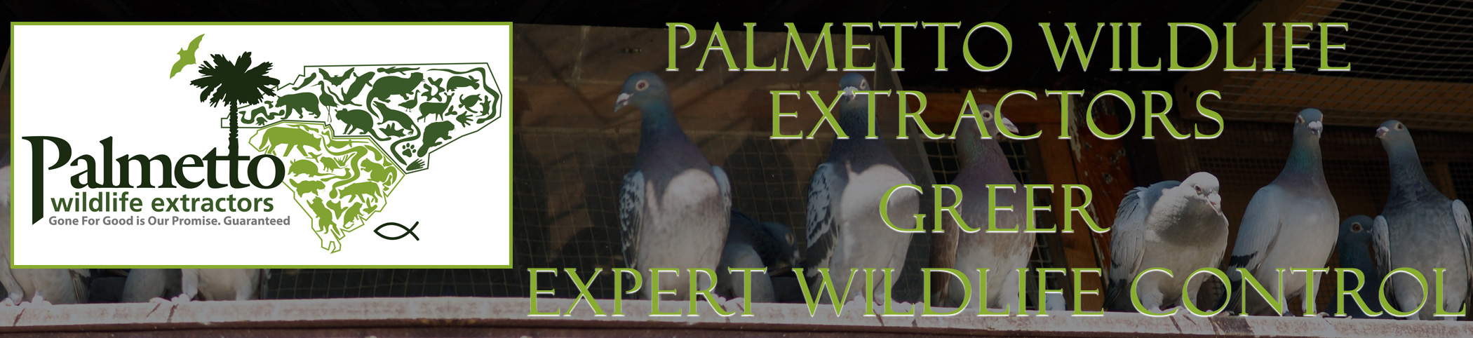 Palmetto Wildlife Extractors Greer south carolina header image