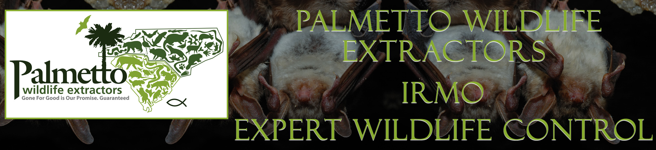 Palmetto Wildlife Extractors Irmo South Carolina header image
