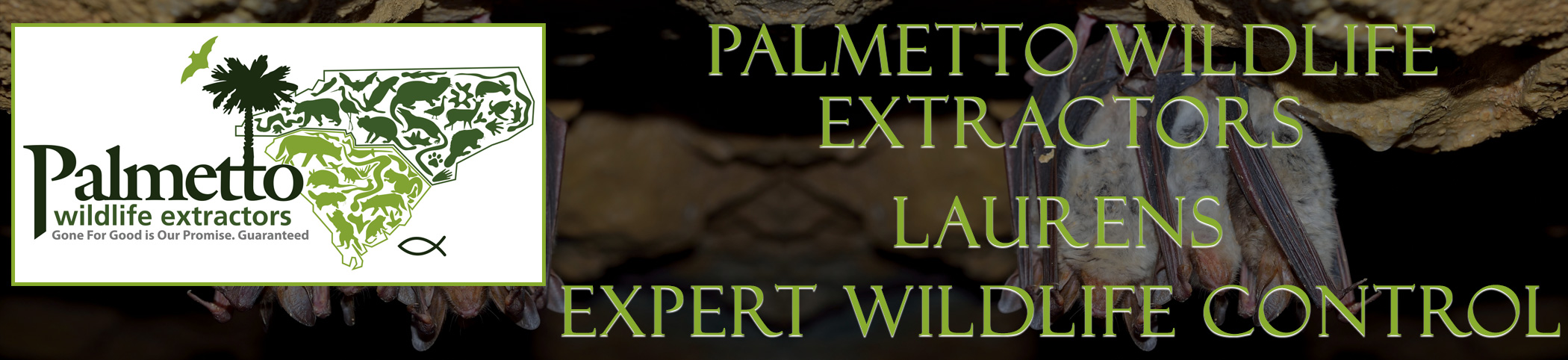 Palmetto Wildlife Extractors Laurens South Carolina header image