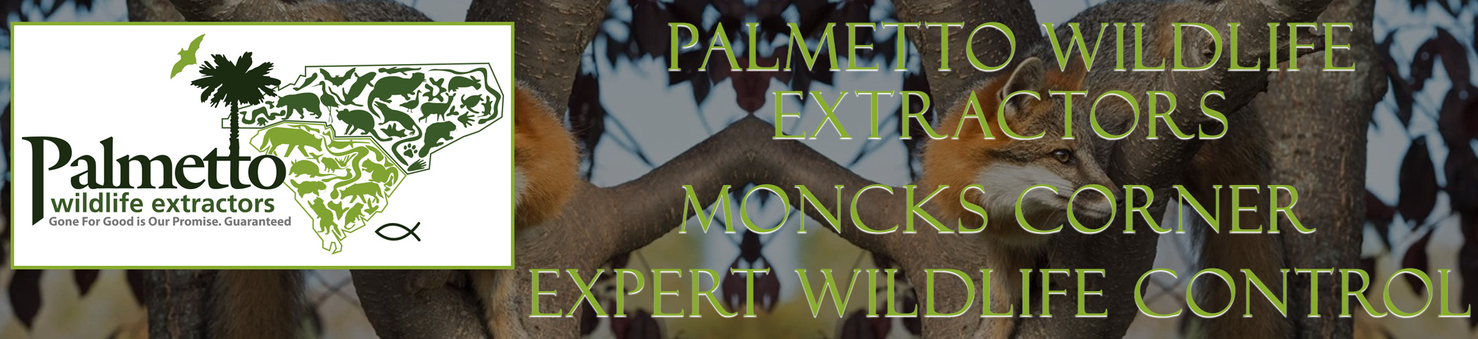 Palmetto Wildlife Extractors Moncks Corner South Carolina header image