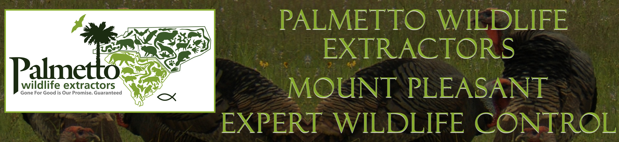 Palmetto Wildlife Extractors Mount Pleasant South Carolina header image