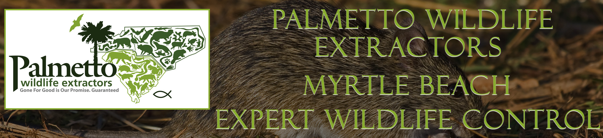 Palmetto Wildlife Extractors Myrtle Beach South Carolina header image