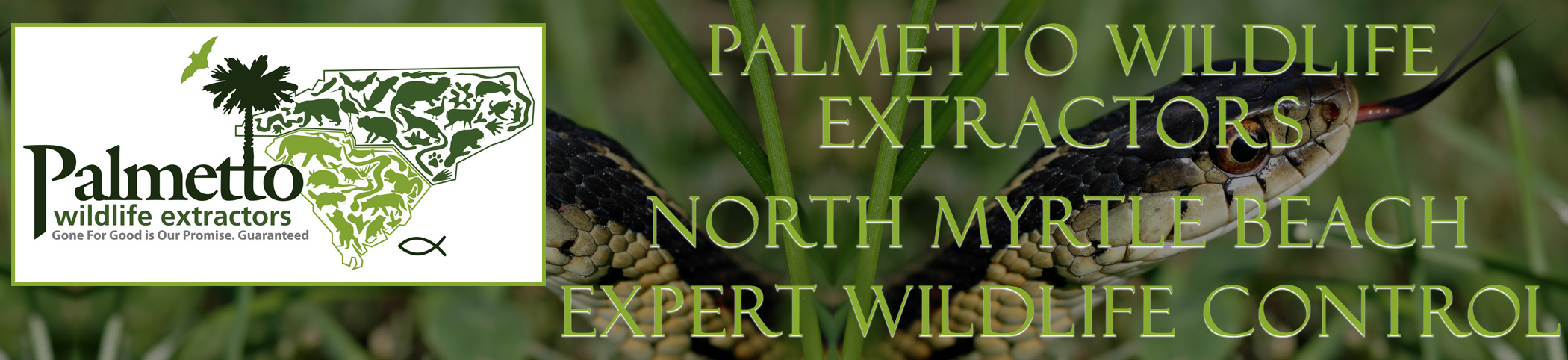Palmetto Wildlife Extractors North Myrtle Beach South Carolina header image