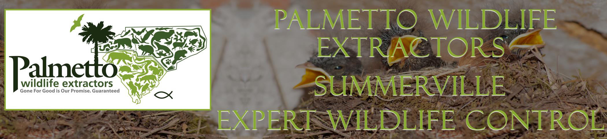 Palmetto Wildlife Extractors Summerville South Carolina header image