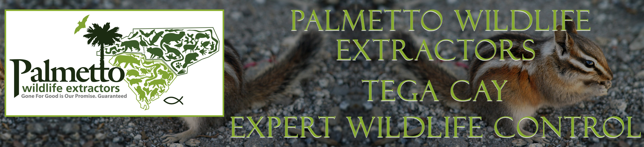 Palmetto Wildlife Extractors Tega Cay South Carolina header image