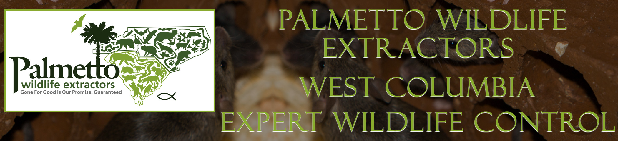 Palmetto Wildlife Extractors West Columbia South Carolina header image
