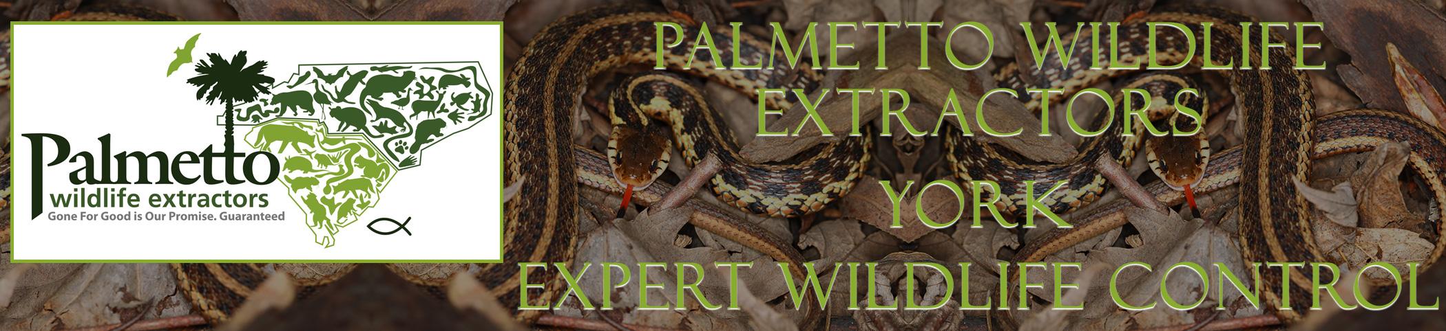 Palmetto Wildlife Extractors York South Carolina header image