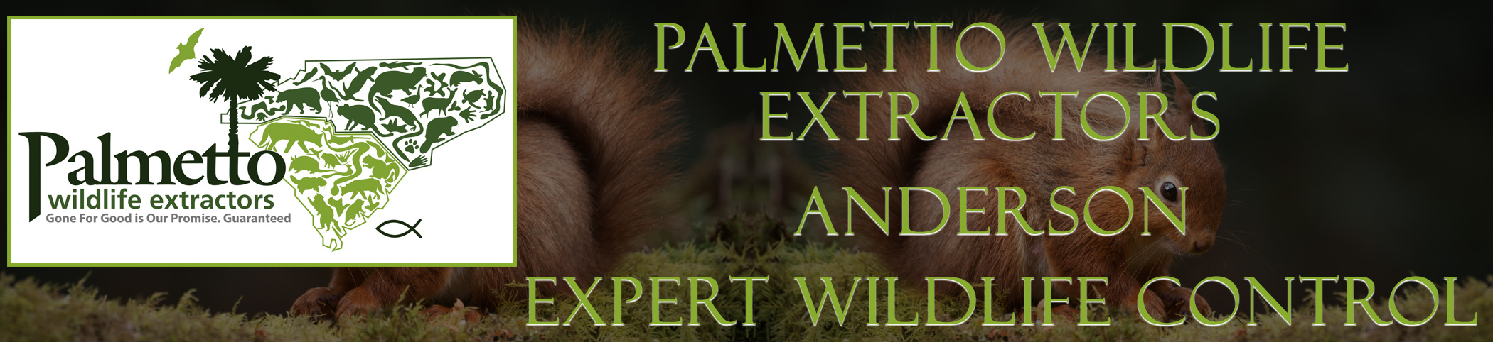 Palmetto Wildlife Extractors anderson south carolina header image