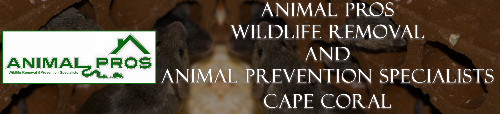 Animal Pros Cape Coral Florida Bat Removal And Wildlife Removal Header Image