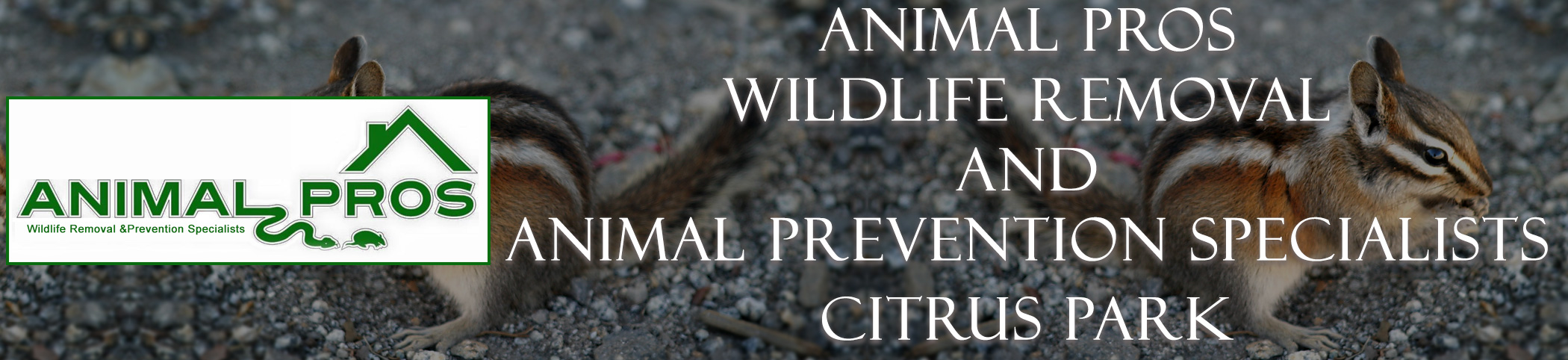 Animal Pros Citrus Park Florida Bat Removal And Wildlife Removal Header Image