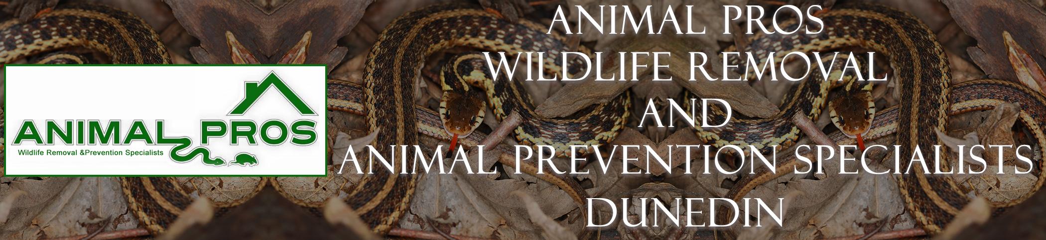 Animal Pros Dunedin Florida Bat Removal And Wildlife Removal Header Image