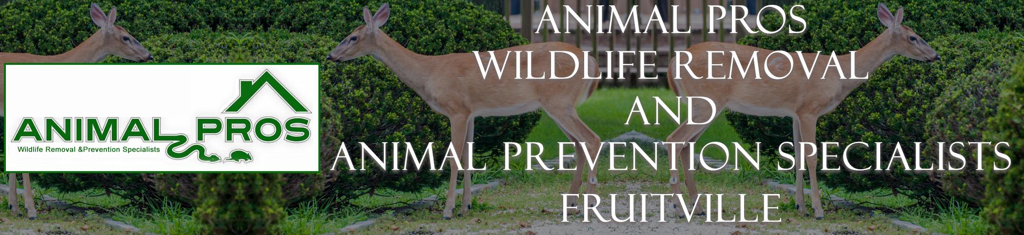 Animal Pros Fruitville Florida Bat Removal And Wildlife Removal Header Image