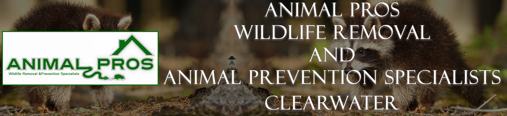 Animal Pros Largo Florida Bat Removal And Wildlife Removal Header Image