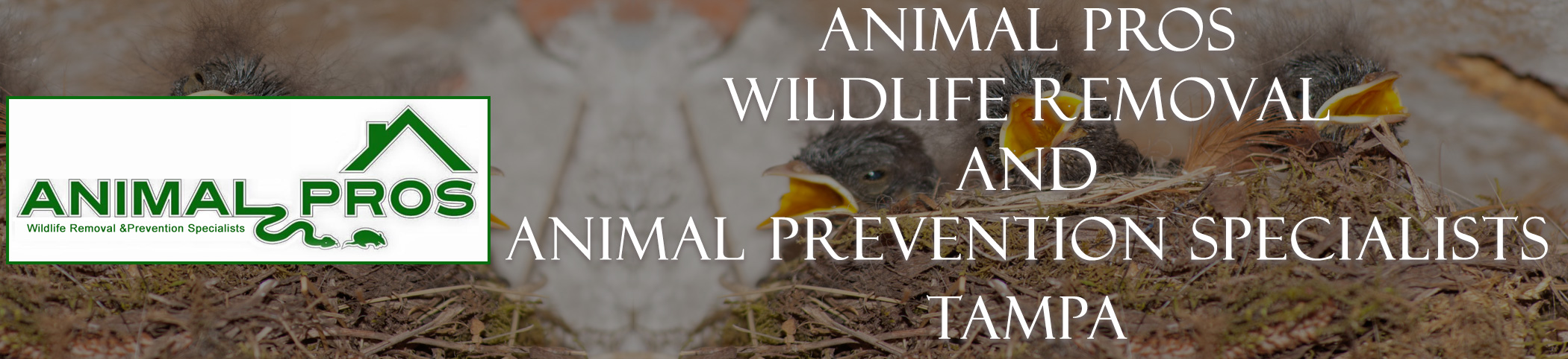 Virginia-Professional-Wildlife-Removal-Services-Glen-Allen