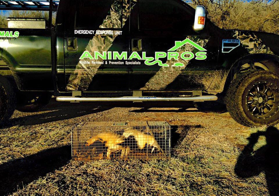 animal pros truck-and-skunks