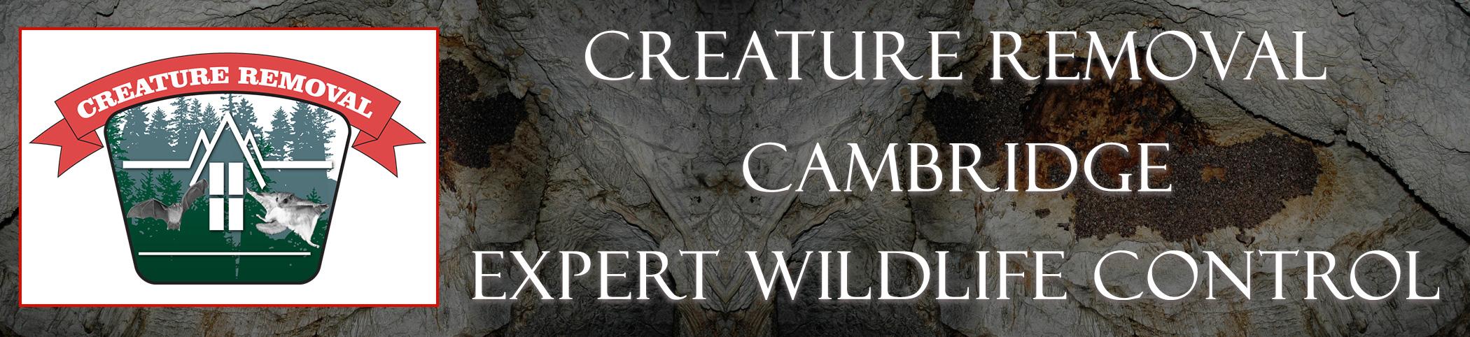 cambridge-mass-creature-removal-header