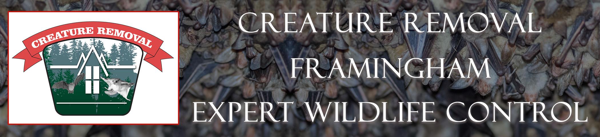 framingham-mass-creature-removal-header