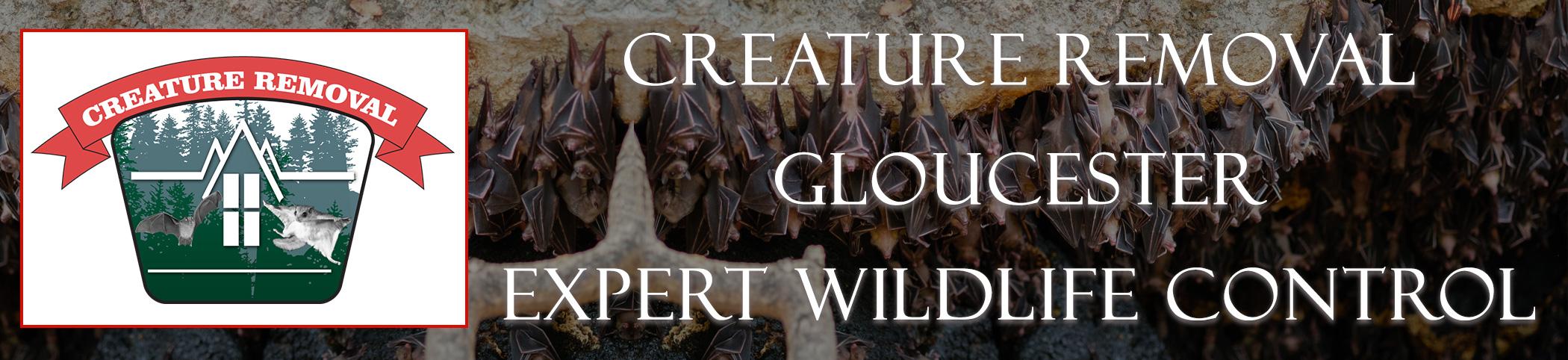 gloucester-mass-creature-removal-header