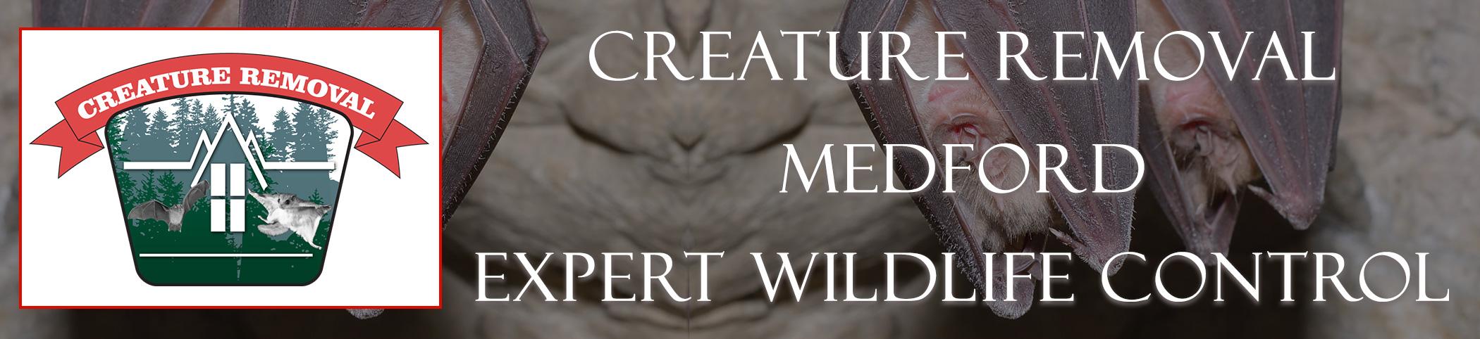 medford-mass-creature-removal-header