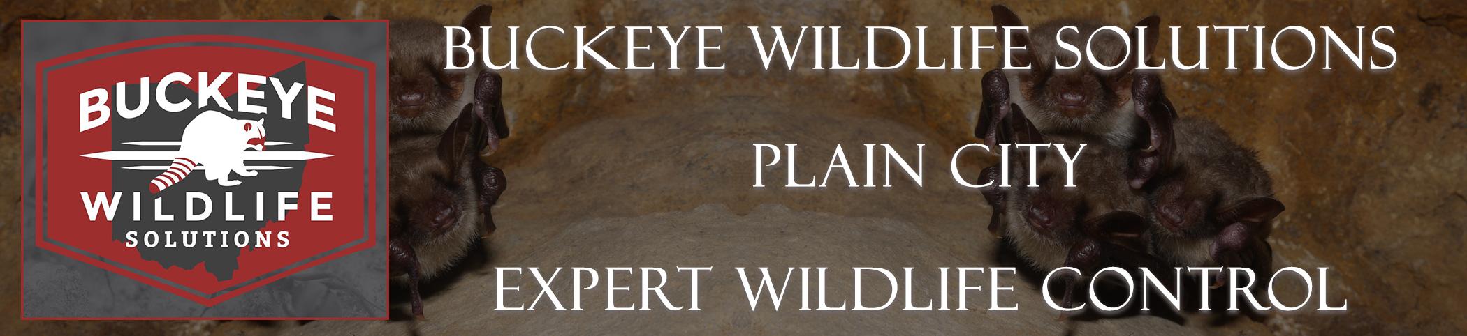 Plain-City-buckeye-wildlife-solutions-ohio-header-image