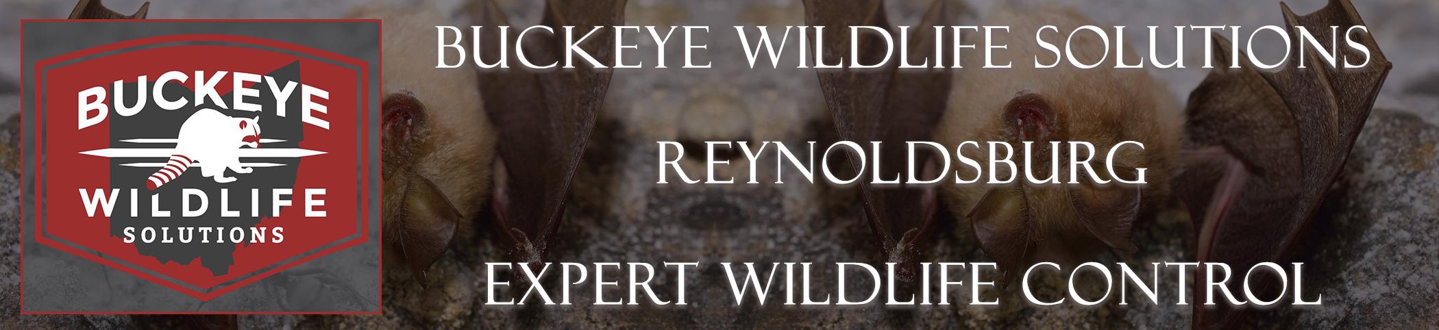 Reynoldsburg-buckeye-wildlife-solutions-ohio-header-image