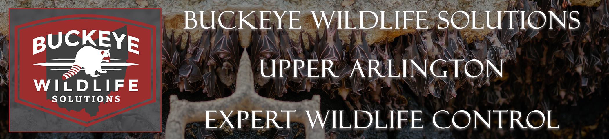 Upper-Arlington-buckeye-wildlife-solutions-ohio-header-image