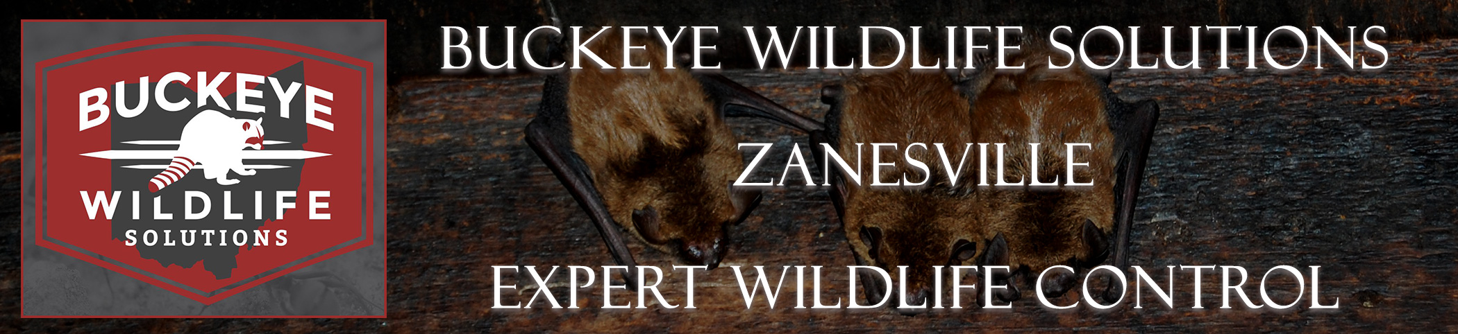 Zanesville-buckeye-wildlife-solutions-ohio-header-image