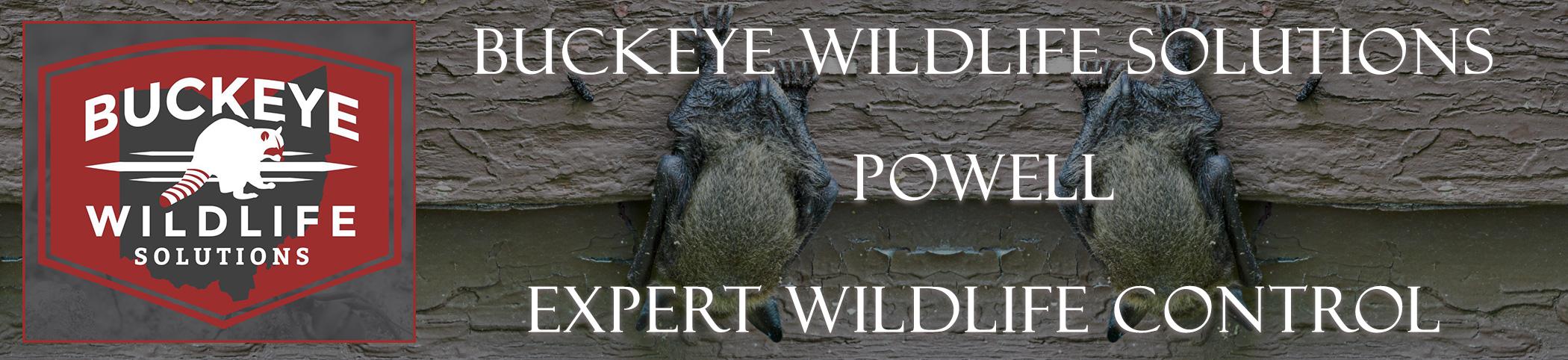 buckeye-wildlife-solutions-Powell-ohio-header-image