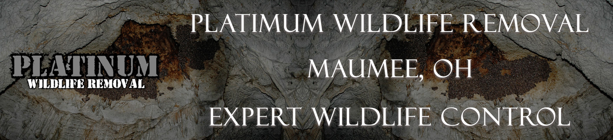 Platinum-Wildlife-Removal_Maumee_OH