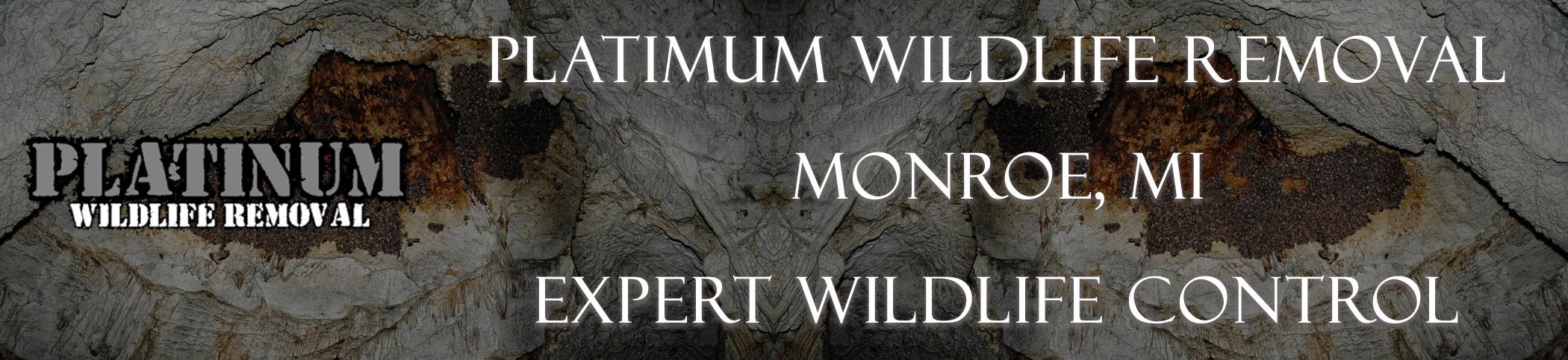 Platinum-Wildlife-Removal_monroe_mi