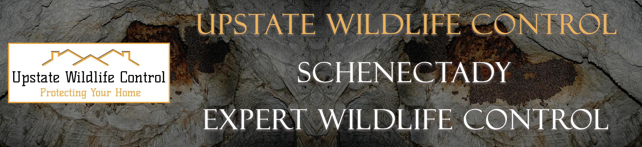 UPSTATE WILDLIFE CONTROL Schenectady