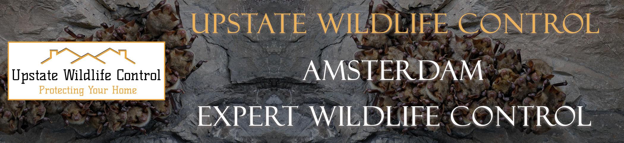 Upstate-Wildlife-Control-Amsterdam-header