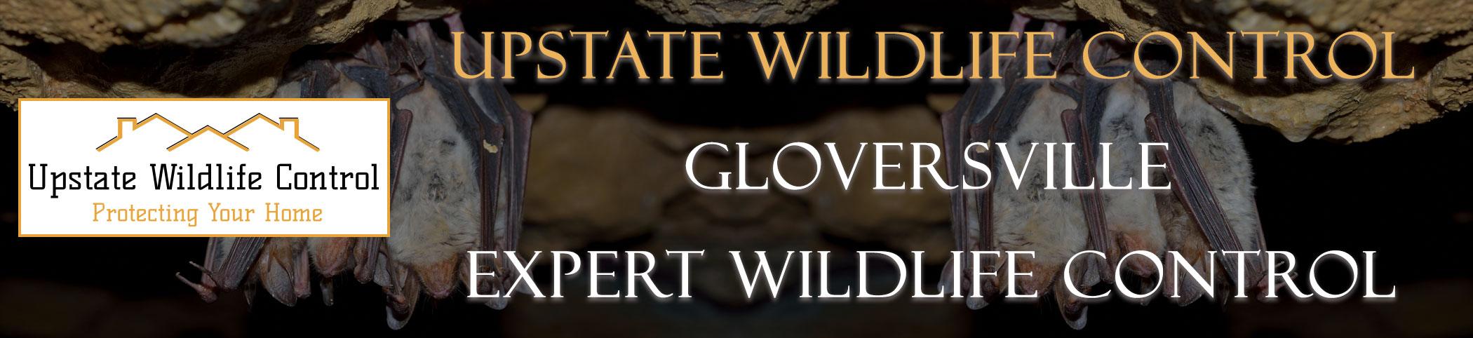 Upstate-Wildlife-Control-Gloversville-header
