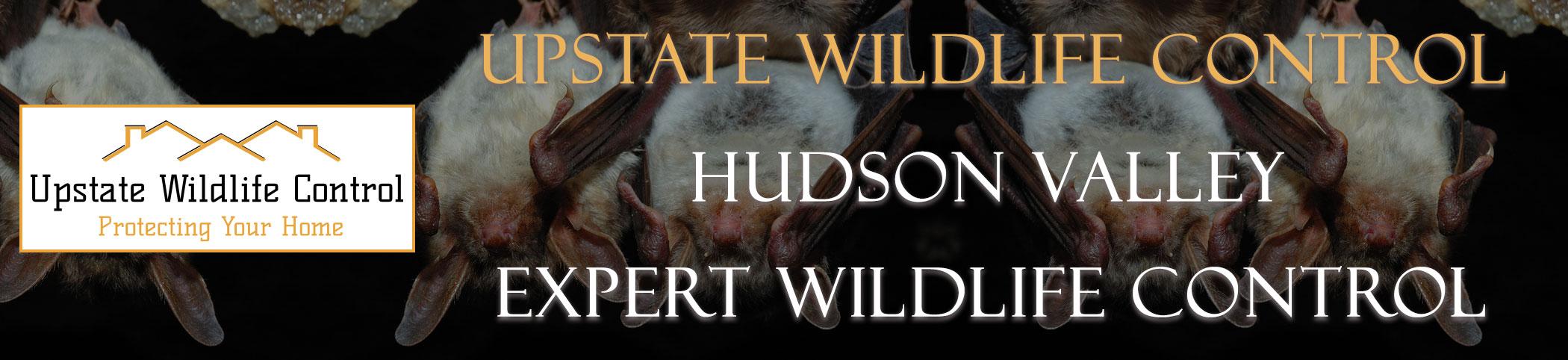 Upstate-Wildlife-Control-Hudson-Valley-header