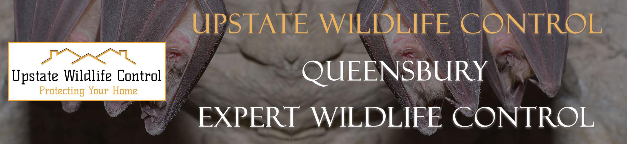 Upstate-Wildlife-Control-Queensbury-header