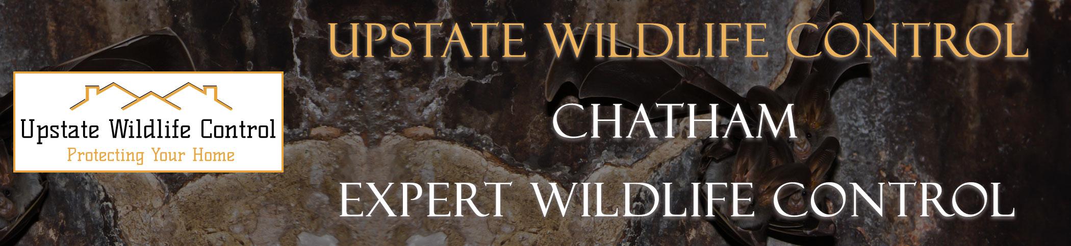Upstate-Wildlife-Control-chatham-header