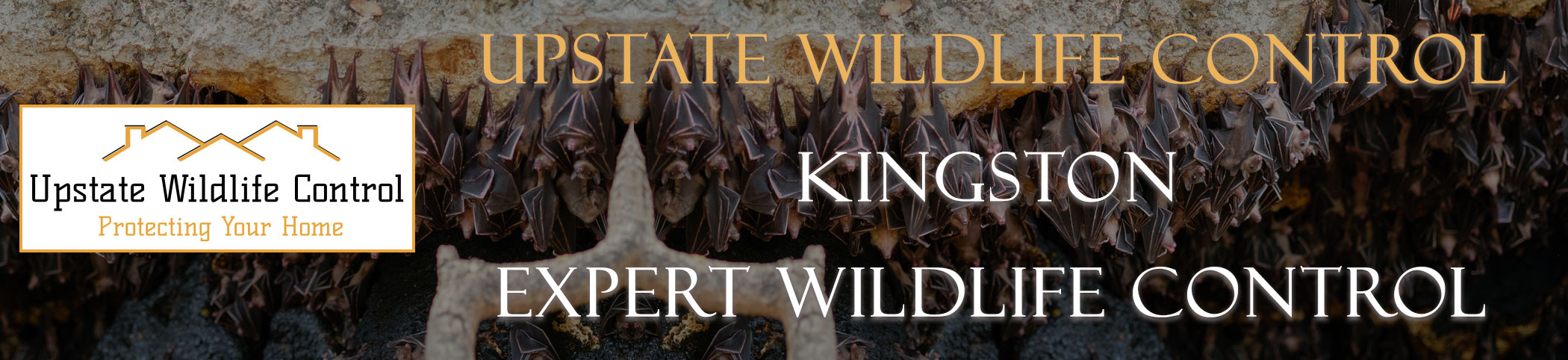 Upstate-Wildlife-Control-kingston-header