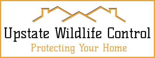upstate wildlife control digital badge